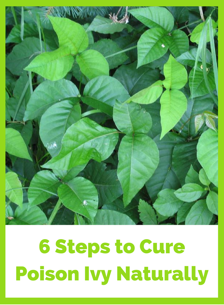 6 steps to naturally treat poison ivy in the eyes. Black Bedroom Furniture Sets. Home Design Ideas